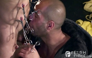 leo attaches surgical clamps to dravens teats